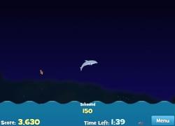 אולימפיאדת הדולפינים - Dolphin Olympic